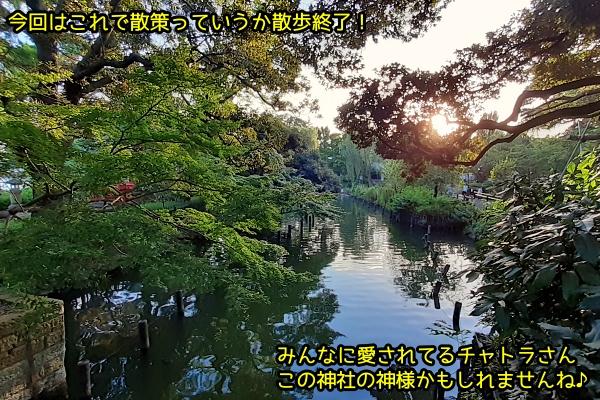 ニャポ旅71 洗足池