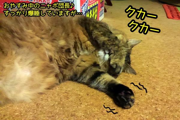 猫の気持ち