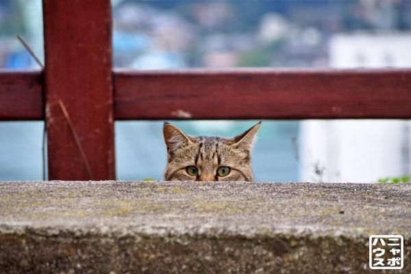 尾道 猫 いたずら