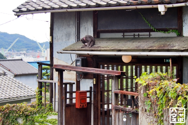 尾道 猫の町 1