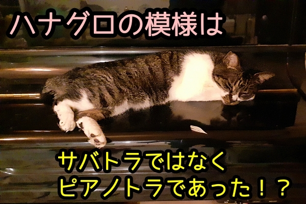 猫 ピアノ
