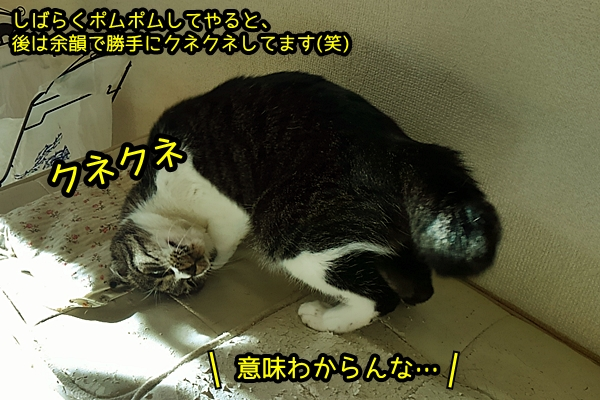 猫 尻尾の付け根