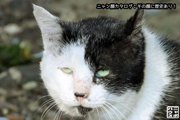 ニャン顔NO173 白黒猫さん