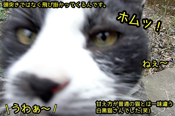 飛び掛かる猫