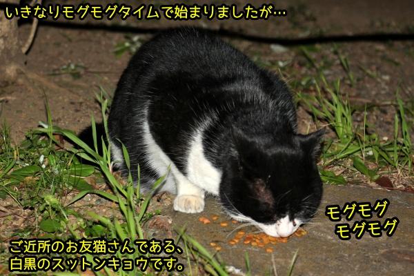 白黒猫 スットンキョウ