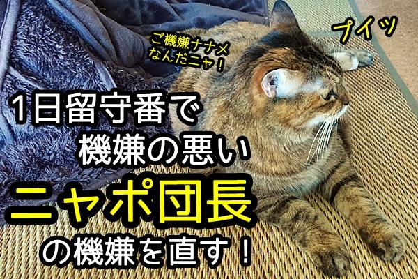 猫 拗ねる