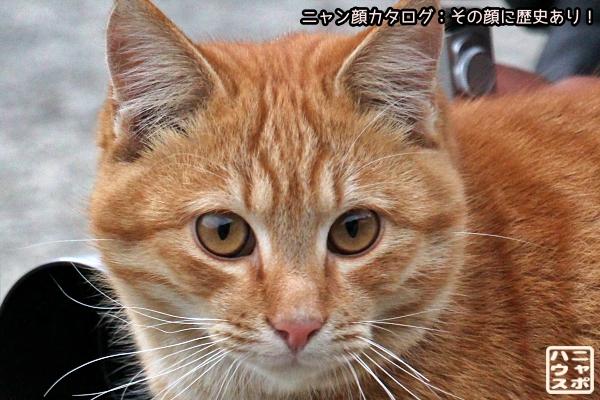 ニャン顔NO174 チャトラ猫さん