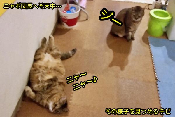 猫 やきもち