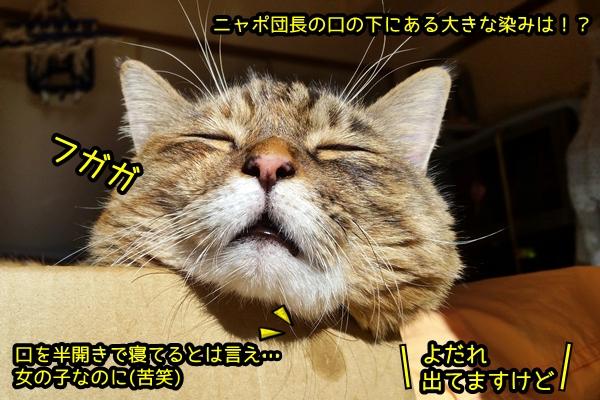 猫 よだれ