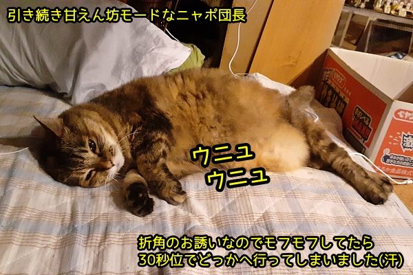 猫 甘えん坊