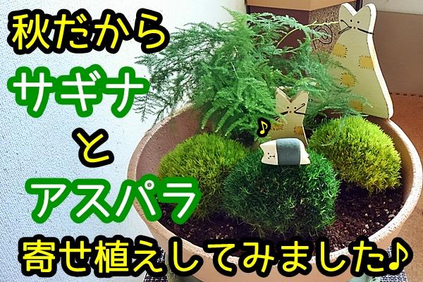 サギナ寄せ植え
