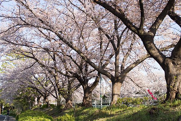 香流川桜9