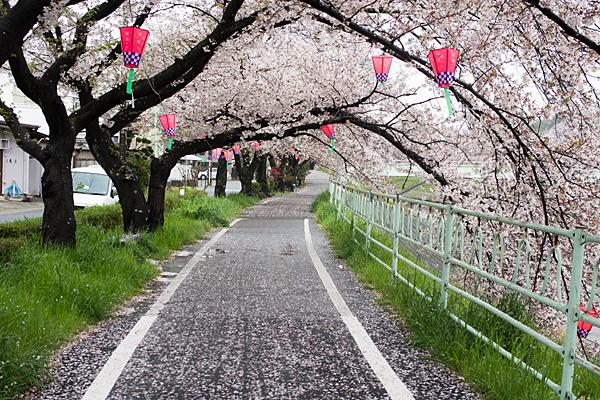 香流川桜雨11