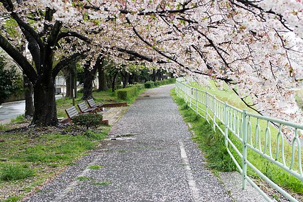 香流川桜雨6