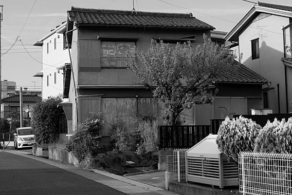 空き家と梅の木