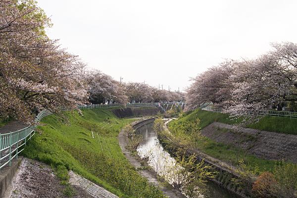 残桜香流川