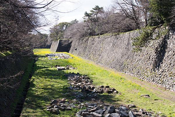 名古屋城堀の菜の花