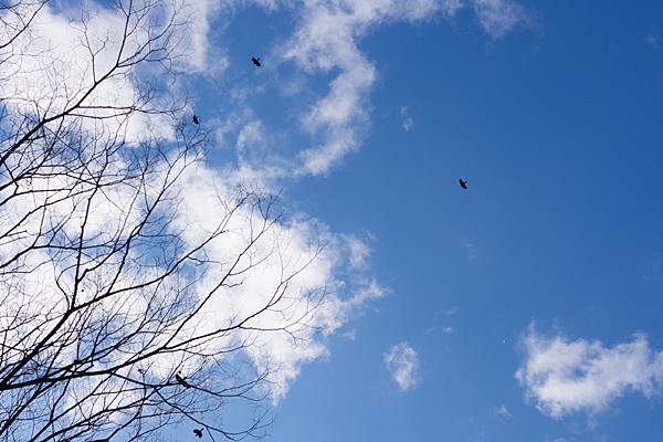 冬木とカラス