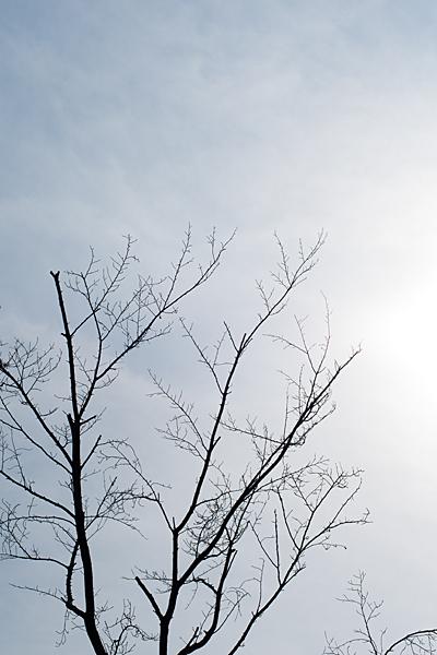 冬枯れ木と太陽