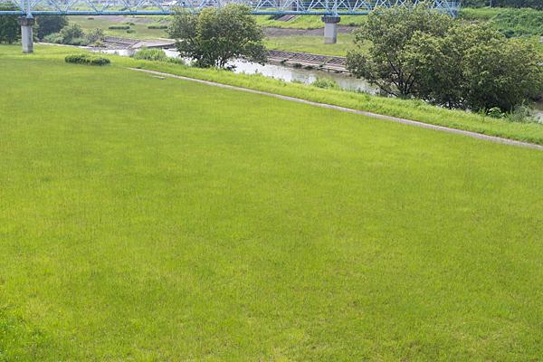 河川敷の緑