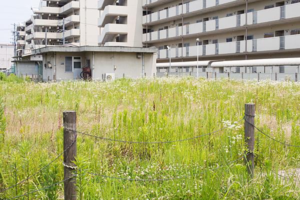 空き地の草花