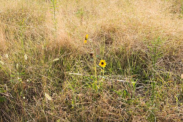 枯れ草に花