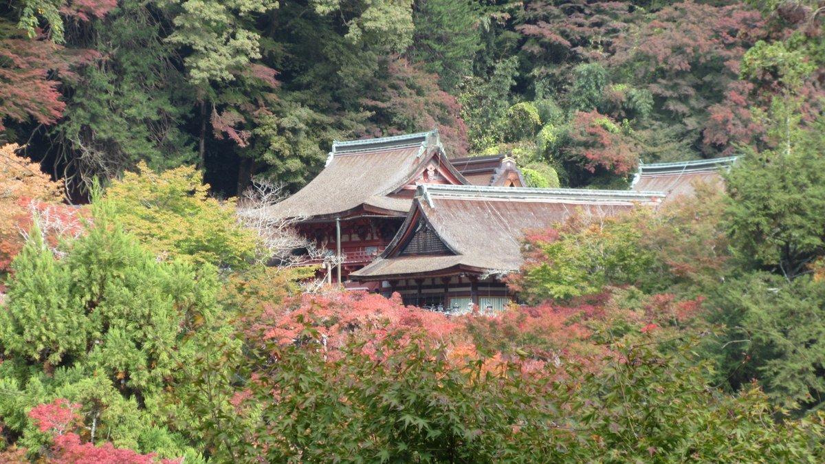 1811-23-櫻井-IMG_6378