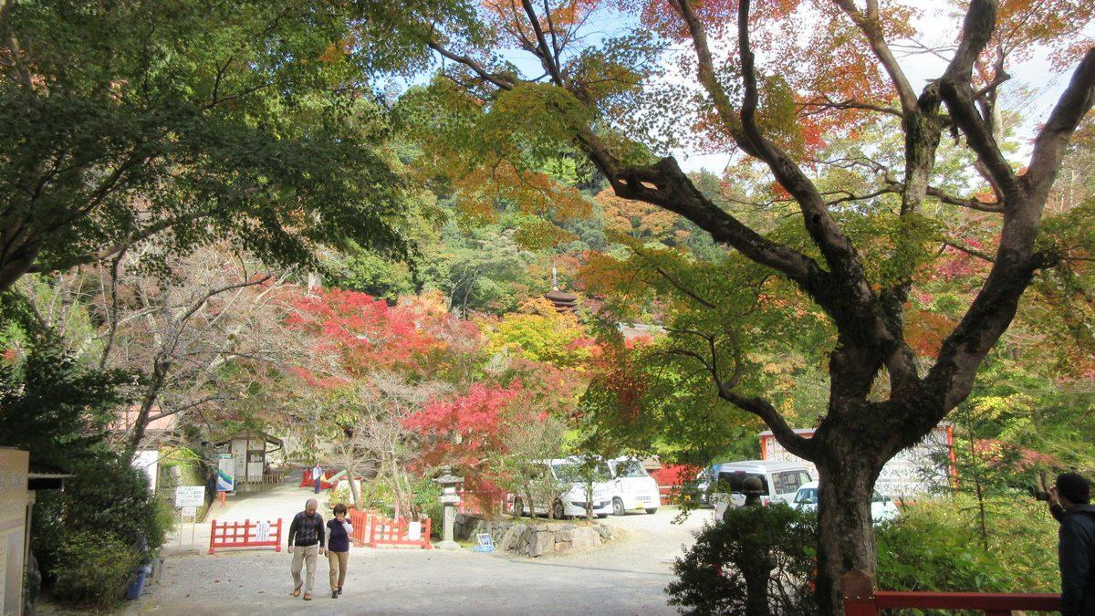 1811-22-櫻井-IMG_6377