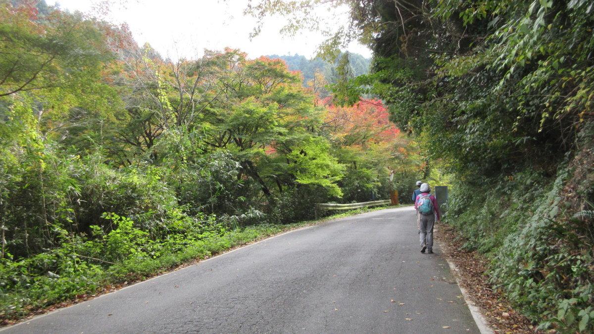 1811-10-櫻井-IMG_6354