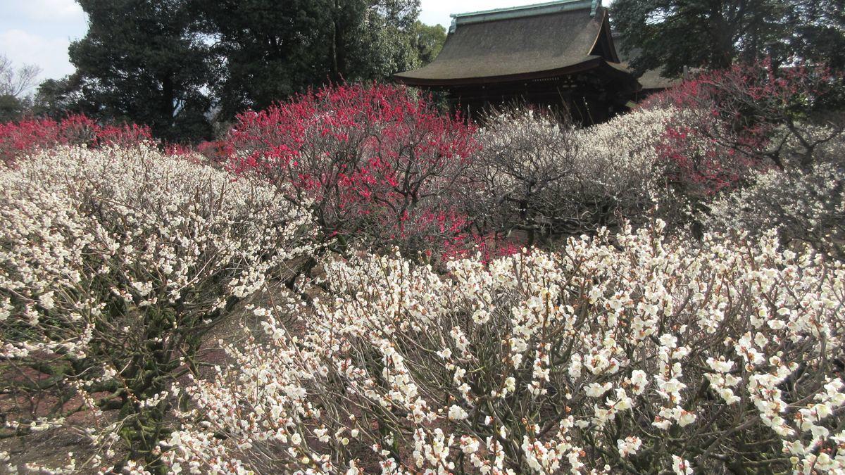 1903-27-道明寺-IMG_0609