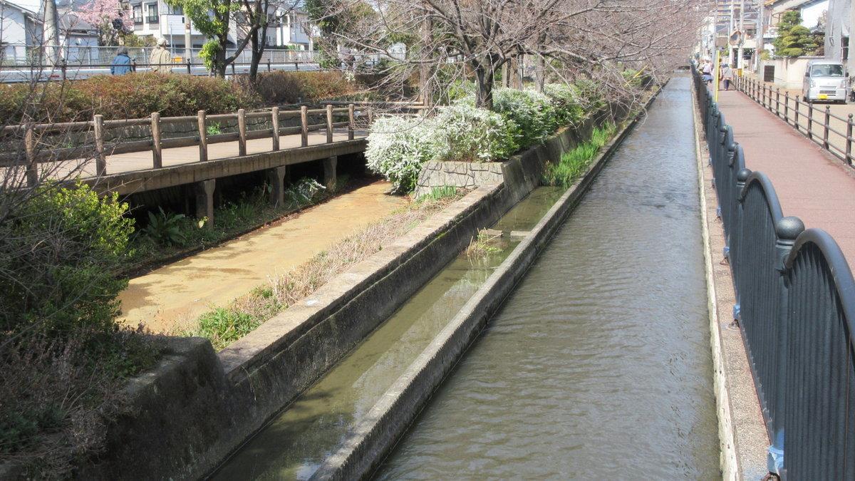 1903-03-八尾-IMG_0688