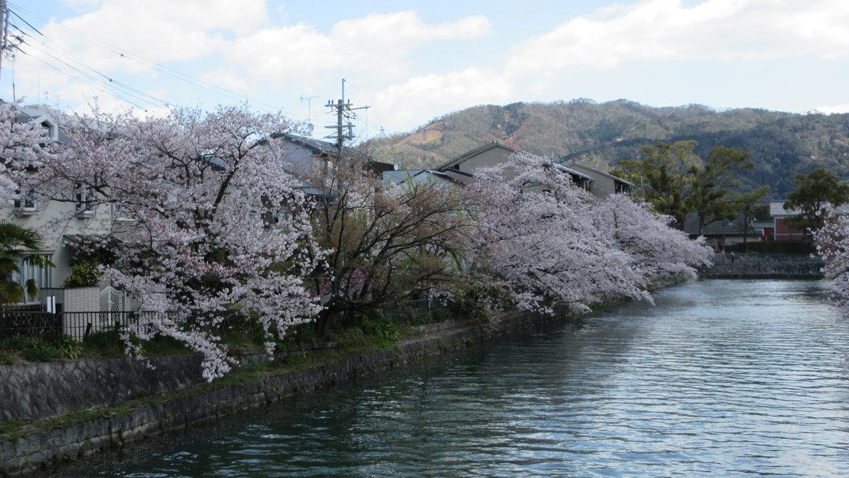 1904-35-京都花見-IMG_1069