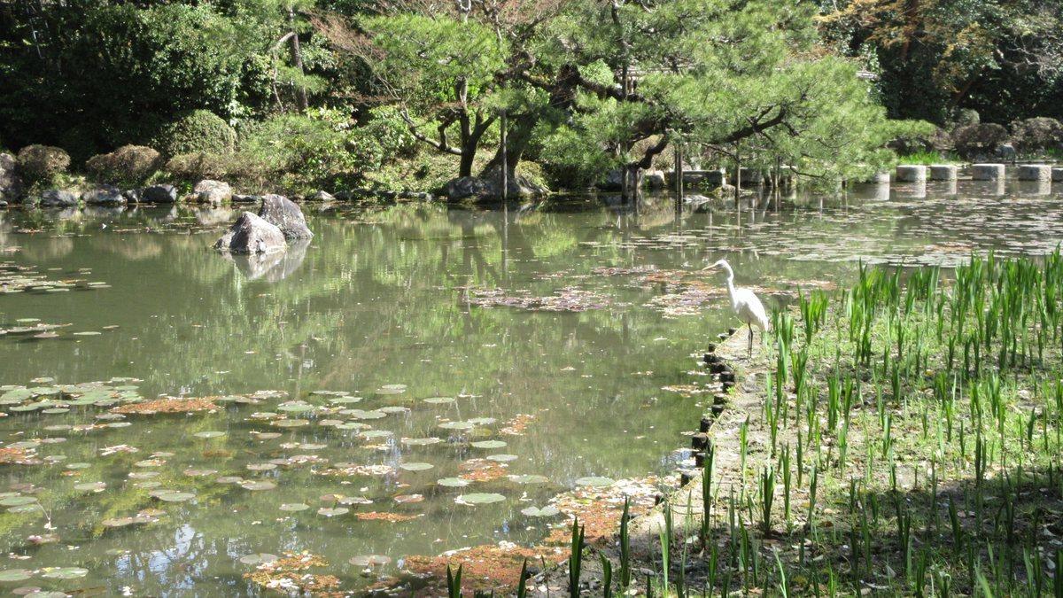 1904-28-京都花見-IMG_1040