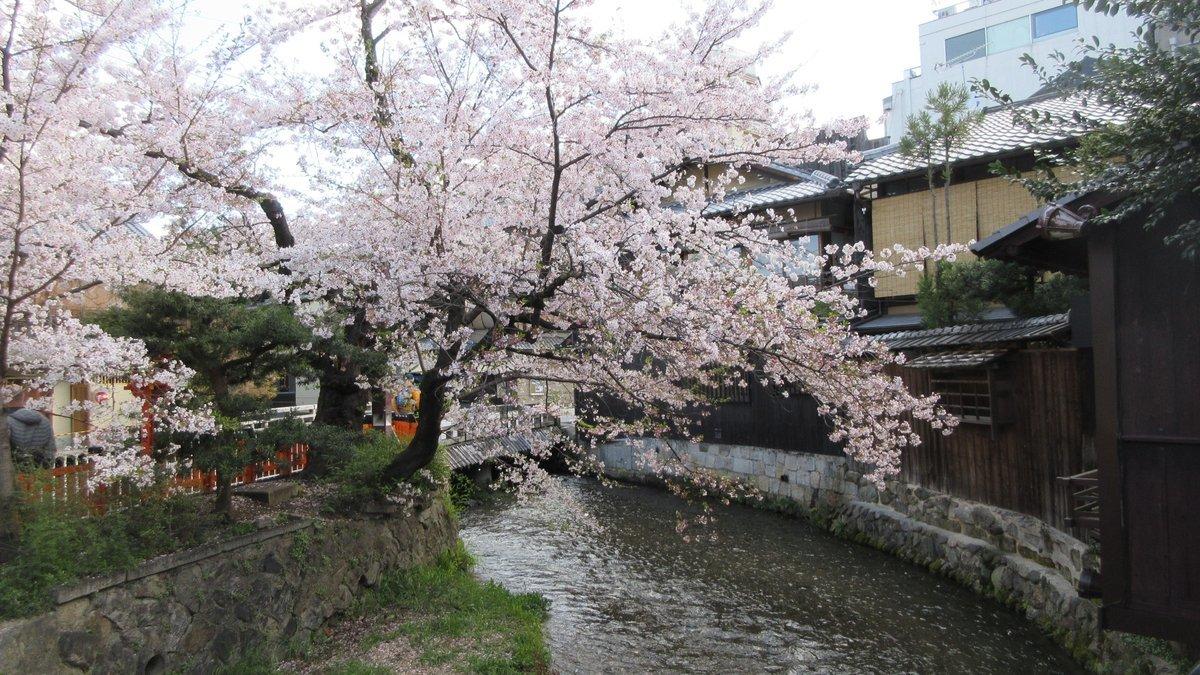 1904-09-京都花見-IMG_0986