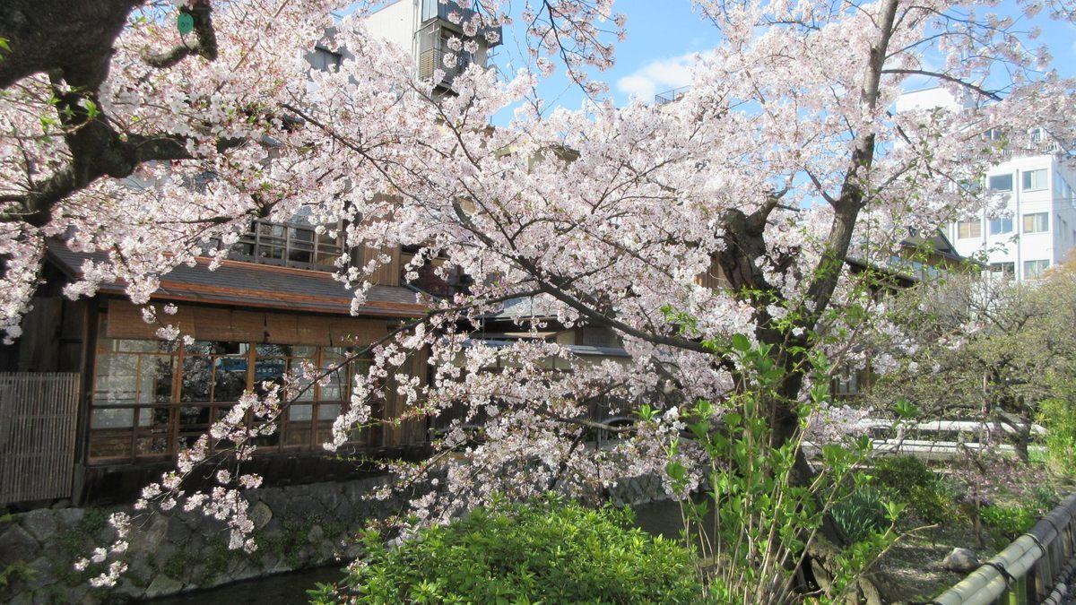 1904-02-京都花見-IMG_0976