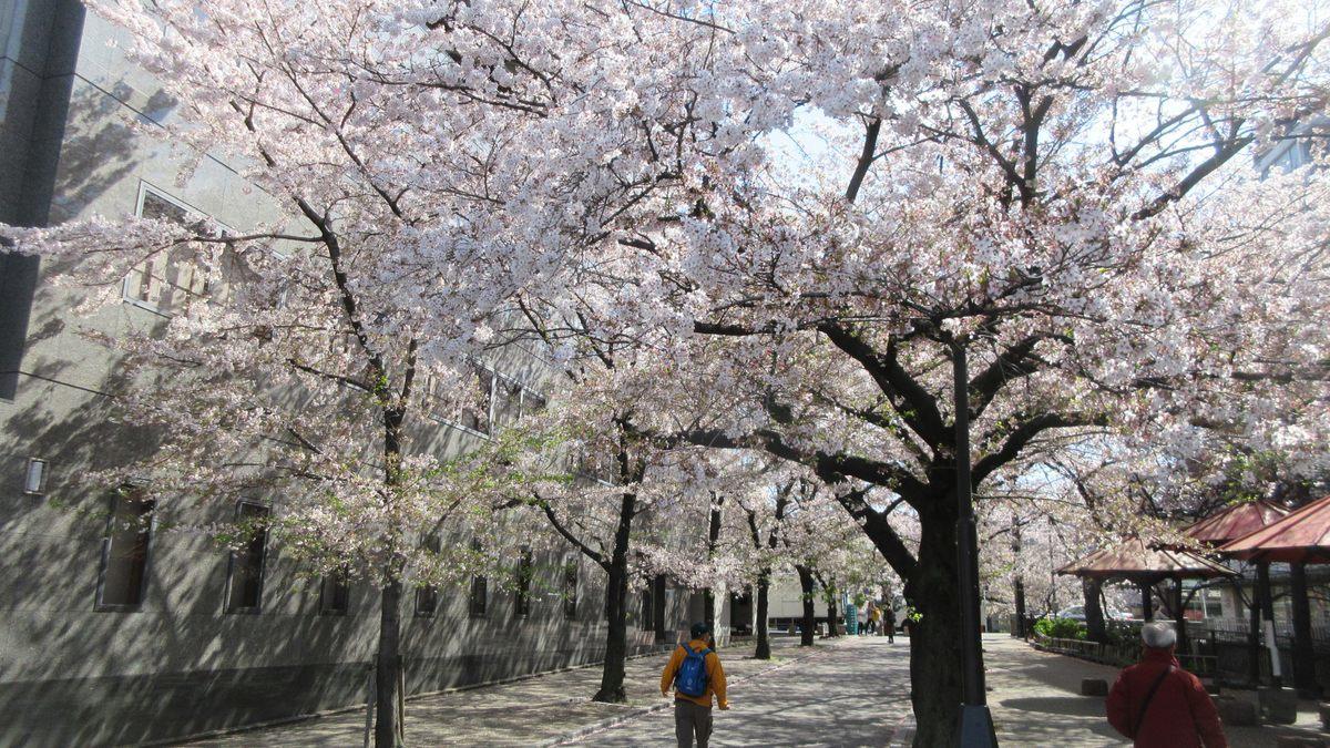 1904-01-京都花見-IMG_0971