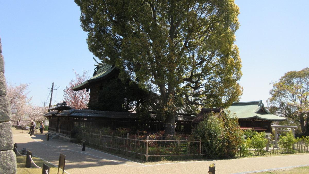 1904-06-佐保川-IMG_1186