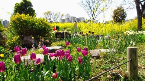 桜以外も有志の方で花壇が整えられています。