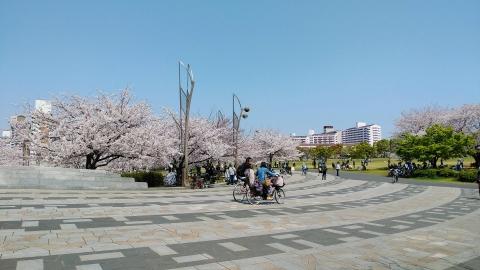 小松川千本桜公園は広々していていいですね。