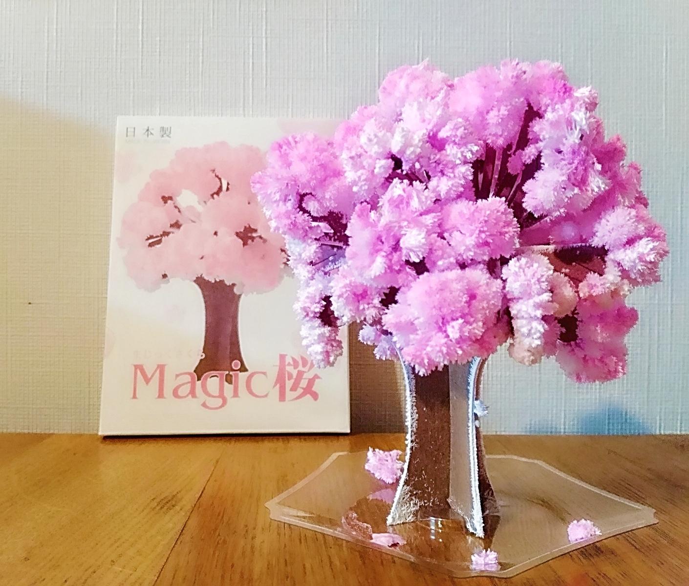 12時間で桜を咲かせられるってホント⁉【Magic桜】は日常に小さな幸せを運んでくれます
