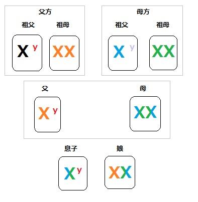 染色体 家系図