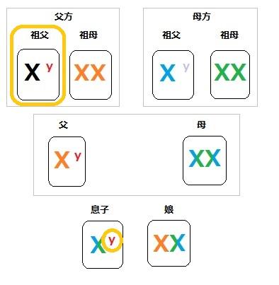 染色体 家系図 1