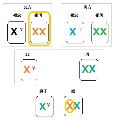 染色体 家系図 2