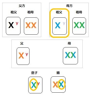 染色体 家系図 3
