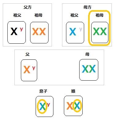 染色体 家系図 4