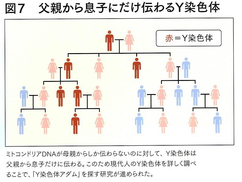 Y染色体 2