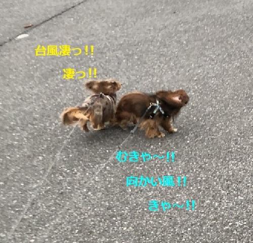 IMG_6990.jpeg