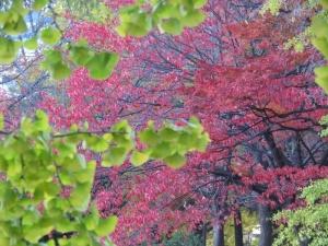中島公園2