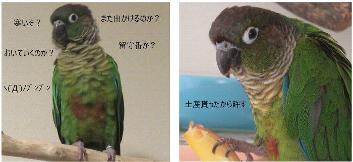 ぴ~こ様u