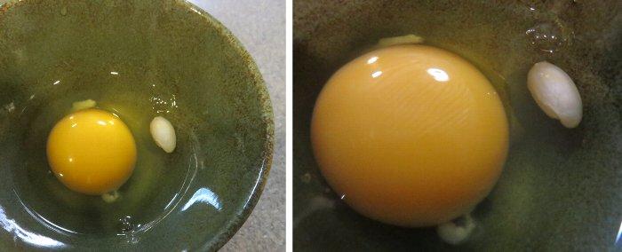 二重卵1u